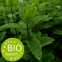 field_of_mentha_x_piperita-bio_1708847456